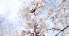 デザイン・印刷:春