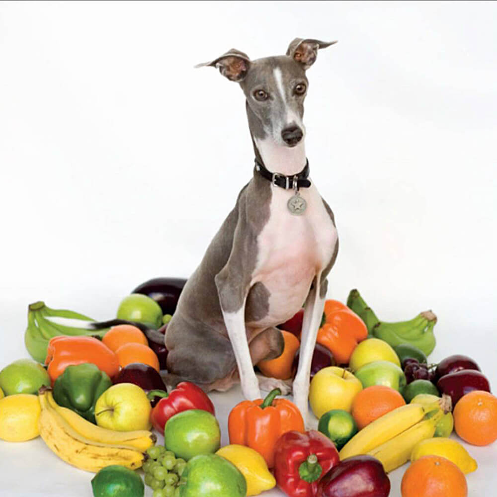 JDL_Jay-Ryan_EXCELLENT-ITALIAN-GREYHOUND